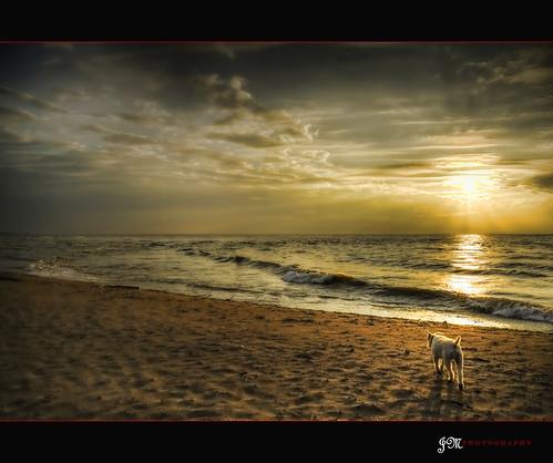 dog beach water son