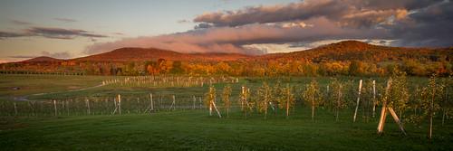 automne lumière paysage couleur verger rasante frelighsburg montpinacle
