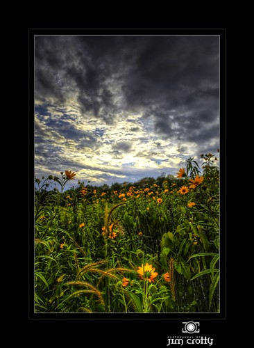 sunset ohio nature beauty landscape photography photo photographer meadow peaceful calm sugarcreek wildflowers dayton tallgrass latesummer jimcrotty fiveriversmetroparks