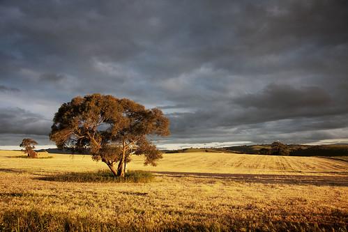 southaustralia barossavalley