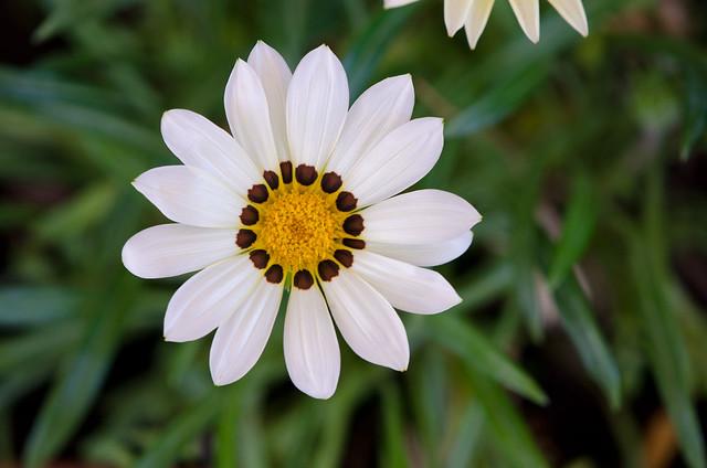 Natural texture of petals