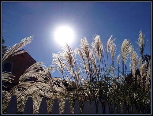 sun nature grass october seasons feather plume ornimentalgrass