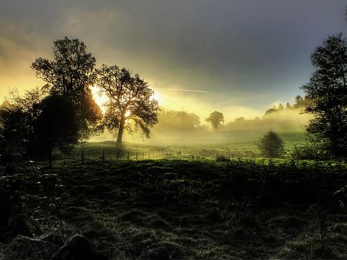 morning trees sun mist color green nature beautiful forest sunrise landscape landscapes dean gloucestershire array forestofdean bestcapturesaoi ericgoncalves elitegalleryaoi