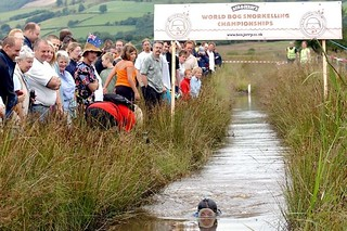 customs-and-traditions-world-bog-snorkelling-championships-llanwrtyd-wells | by Ethreon