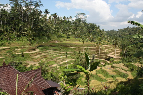 Rice terraces   by MarkDoliner