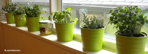 Windowsill-Herb-Garden | by nh0k blu3