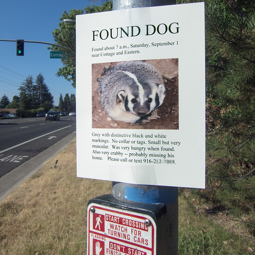 found dog   by Robert Couse-Baker