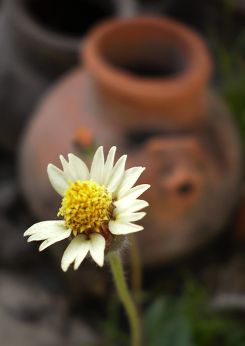 Flower & pot | by Vijay Sonar