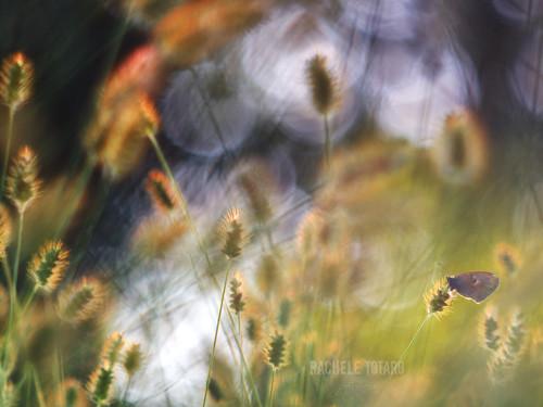 butterfly light primotar vintagelens vintage bokeh bubbles bug golden hour colours colorful