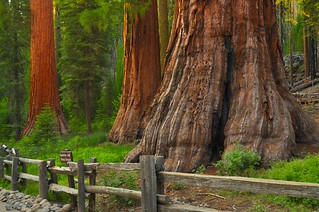 Mariposa Grove Winter Trails,  Yosemite National Park | by faungg's photos