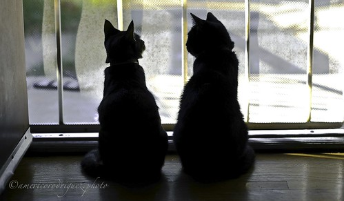 Kitty Conversations- Cropped | by aPentaconBrujo