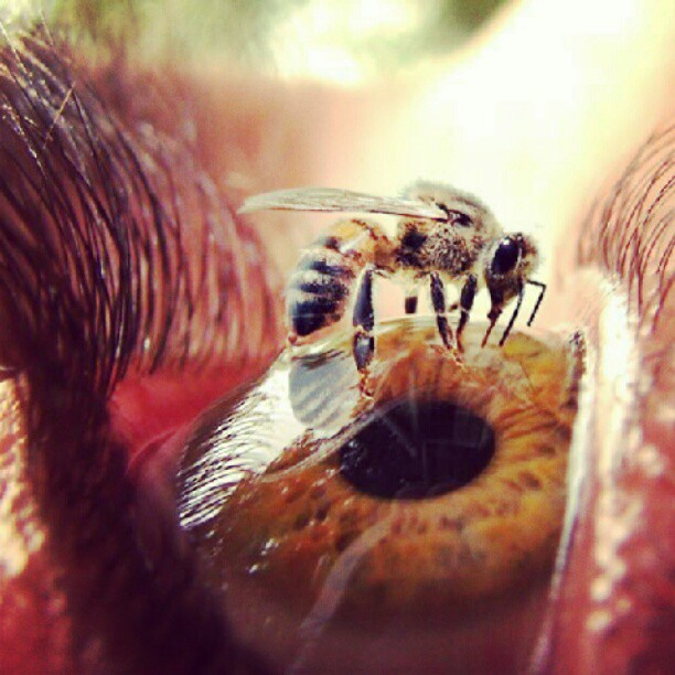 Woow perfect click #nature #eyes #eyeball #photography #un