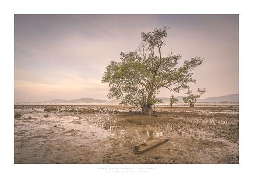 thailand phuket khaokhad tide mangrove chalong driftwood mud sony