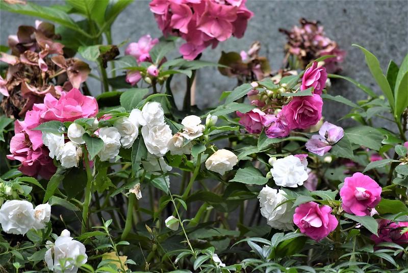 Flower Bed 07.07 (4)
