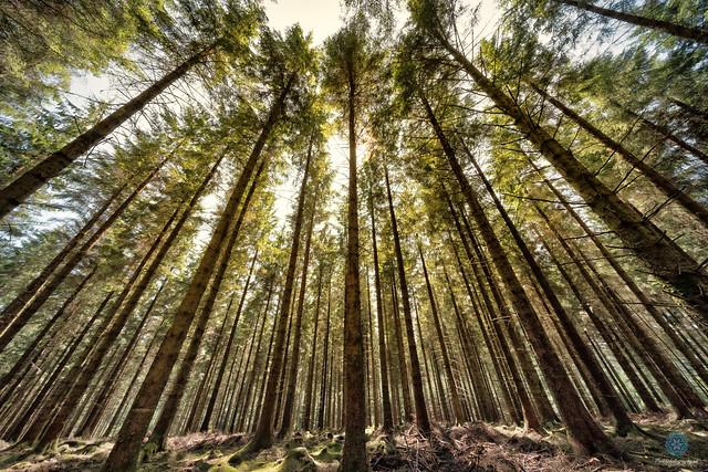 Fernworthy Forest - Dartmoor