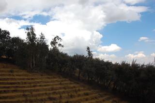Views from Paccha and Bosque Dorado, Huancayo, Junín, Peru | by blueskylimit