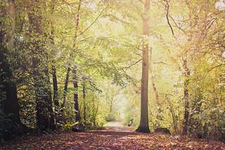 Wald   by mbiebusch