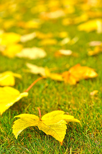 autumn green fall grass leaves yellow gold leaf dof bokeh depthoffield