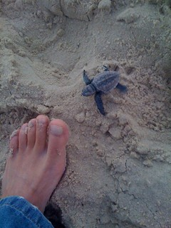 08 Joey Turtles at Mudjimba2
