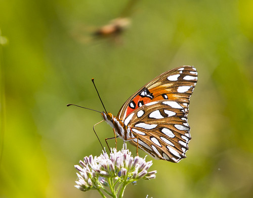 flower nature butterfly insect wildlife bloom wildflower 550d