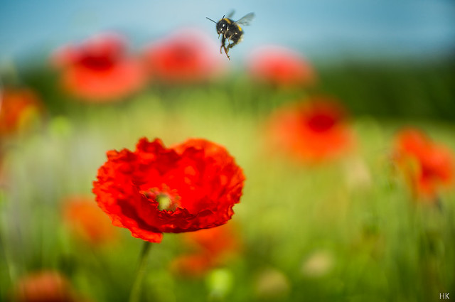 Bumblebee's Paradise
