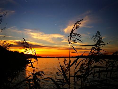 sunset water sky outdoor cloud clouds cloudporn reed tree trees jacoverheul blue orange sun dusk serene