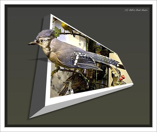 Westfield NY ~ Paterson Library ~  Bird Specimen # 1