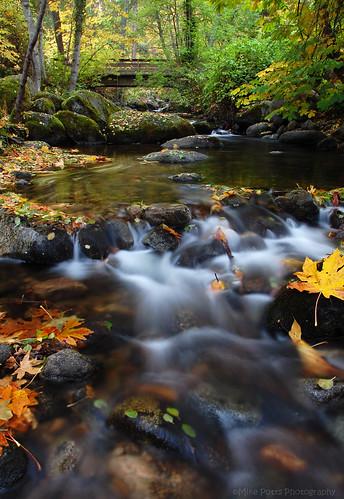 bridge autumn fall water oregon creek leaf october magic ashland lithiapark roguevalley bigleafmaple ashlandcreek