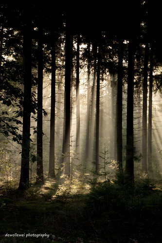 trees explore landschap ommen rayoflights explored stegeren raysoflichht