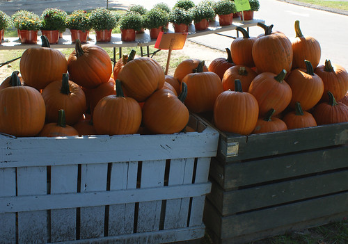 Pumpkins, Charlotte Hall Farmers' Market