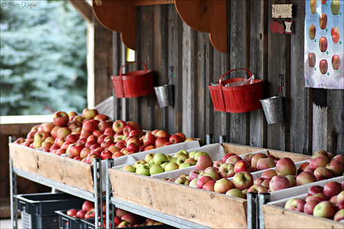 Pre-Picked Apples - © Patty Keigan