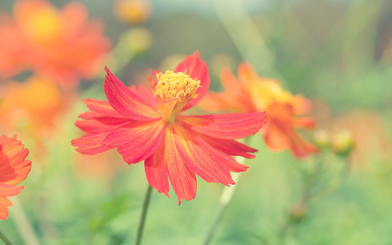 Цветок7
