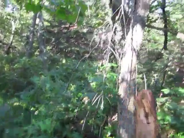 040 Video of Hiking the Herd Path Near the Top of Rusk Mountain