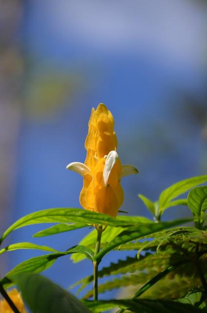 Flower (DSC_3675)