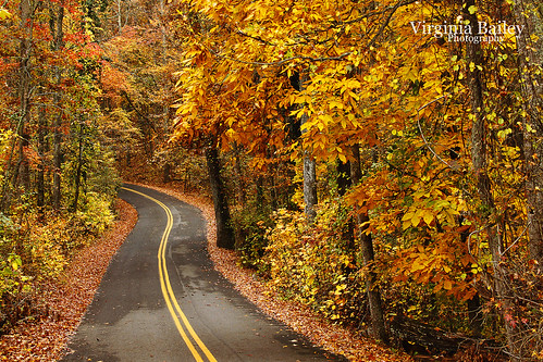 road autumn trees orange fallleaves usa fall leaves america woods october tn tennessee explore walden signalmountain 52weeks project52 hamptonroad virginiabaileyphotography