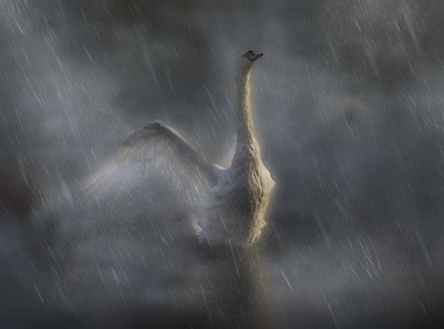 I LOVE THE RAIN   XXXXXXX