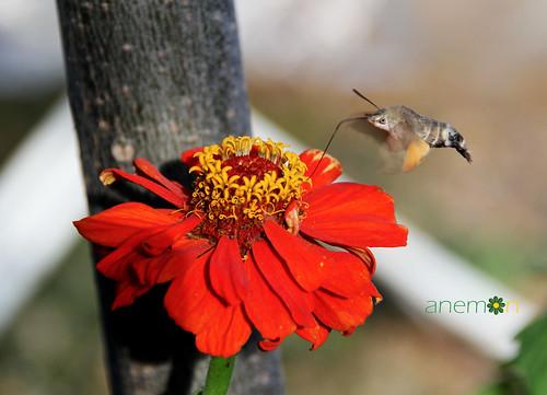 flower bee çiçek arı güzellik
