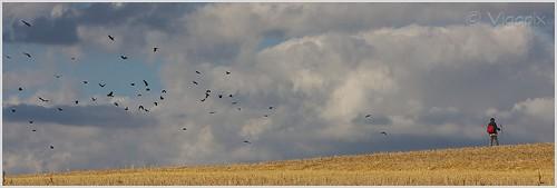 Il piccolo sciamano e la battaglia coi corvi