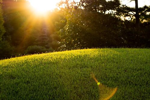 park sunset sunlight plant color green nature japan sony 日本 夕日 夕暮れ 愛知県 nex モリコロパーク 長久手市 nex7