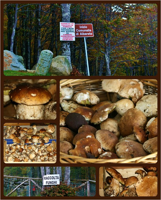Autumn time - Mushrooms