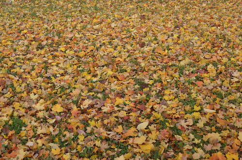 Pere Marquette Fall Leaves on Ground   by rdwatson78