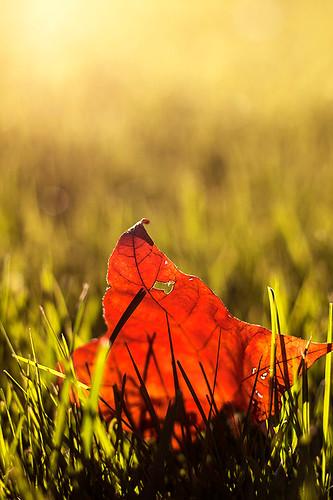 autumn light orange sunlight green fall grass yellow leaf eveninglight ef50mm18 heartshapedhole canoneos50d
