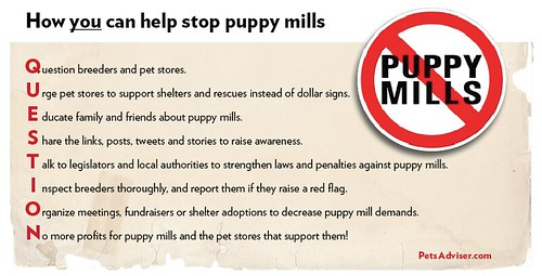Stop Puppy Mills - warning signs | by Petful.com
