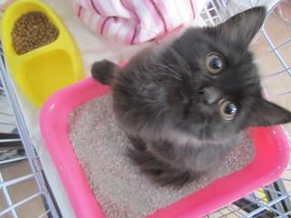 Rehome kitten | by Rayya The Vet