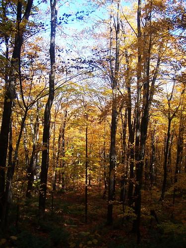 trees mountain color lyon andyarthur