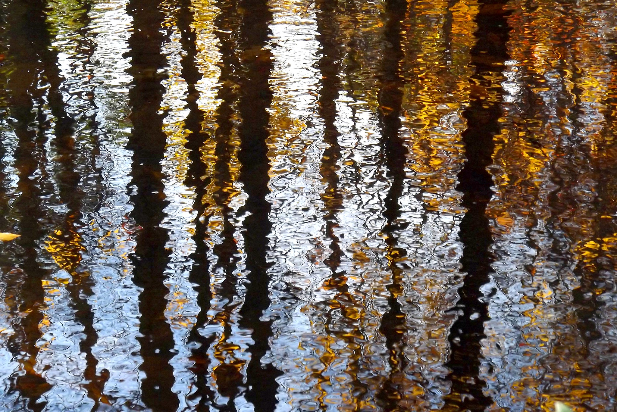 Autumn Tree Ripples