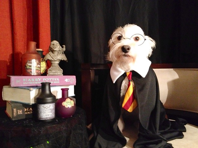 Dog Looks Like Harry Potter