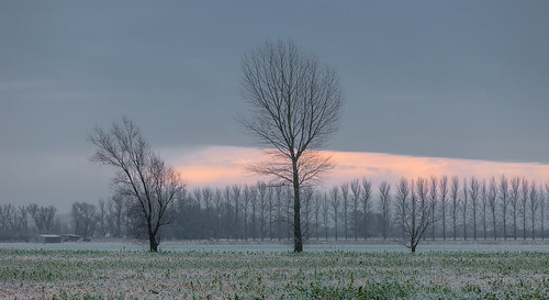 trees winter ice sunrise frost fenland