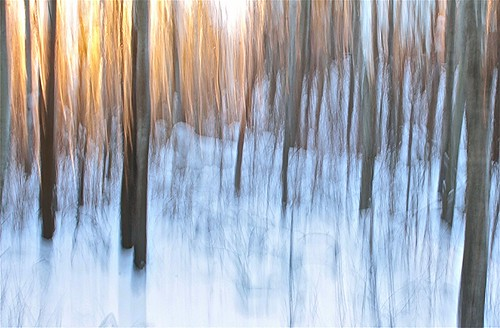 winter snow abstract tree nature forest edmonton icm