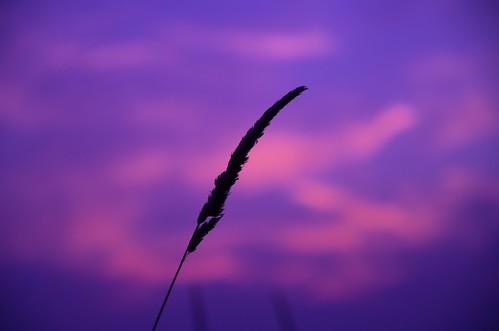 autumn silhouette sunrise nikon herbst earlymorning kontrast sonnenaufgang schilf frühermorgen d7000